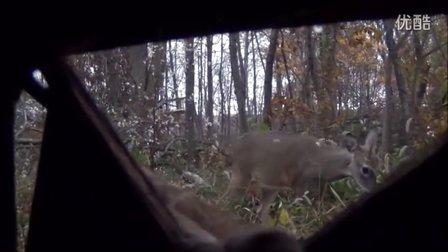 【猎人与森林第一期】猎人眼中的四季 狩猎 打猎 鹿
