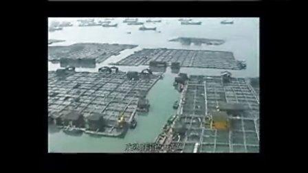 """福建""""三都港""""出产无公害大黄花鱼"""