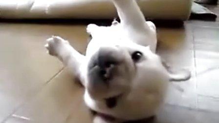 翻不過身的小狗,又可愛又可憐