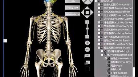 3D医学人体解剖软件视频演示