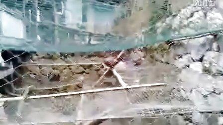 环江县水源镇民权村红山屯-野鸡养殖场