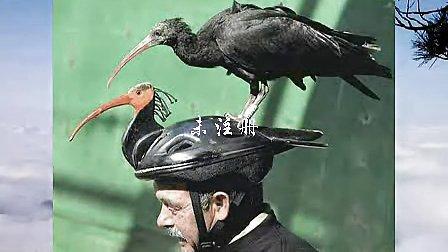 动物搞笑瞬间 爆笑精彩瞬间www.jofanli.com.avi