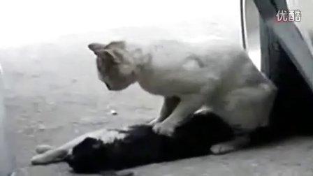 看到第二个我流泪了 动物世界里的真爱