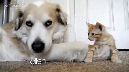 【优酷搞笑】有爱的猫咪和狗狗 萌死了