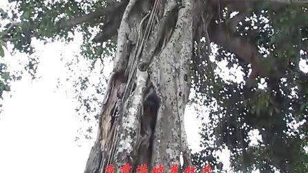 海南省昌江县作曲家王云清作品《七叉不差七叉好》