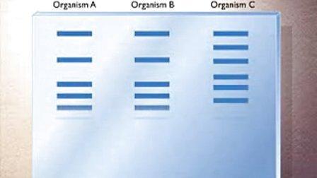 核酸分子杂交技术-Southern blot