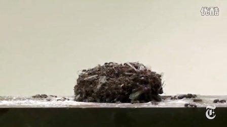 难以 置信 的 蚂蚁 物理学