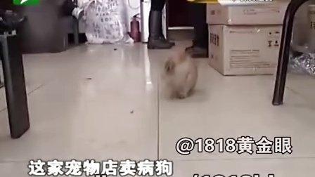 酷狗买的狗 都是星期狗