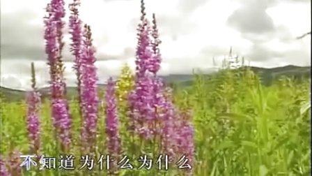 《为什么》--电视剧《乌兰夫》插曲-- 娜仁图亚