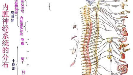 国家精品课程 视频教学 神经病学 神经内科 神经解剖17、神经系统(总论)(上)