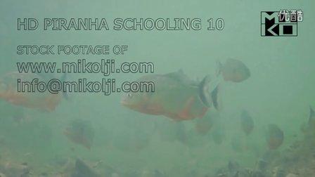 水下高清拍摄野生黑斑水虎鱼