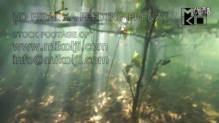 水下跟踪拍摄野生水虎鱼群