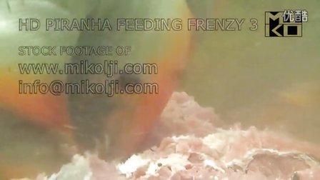 野生状态下水虎鱼群进食的高清视频