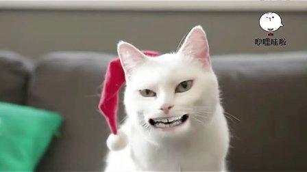 太逗了!销魂猫大唱圣诞歌
