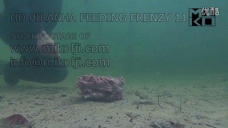 近距离高清拍摄水虎鱼进食