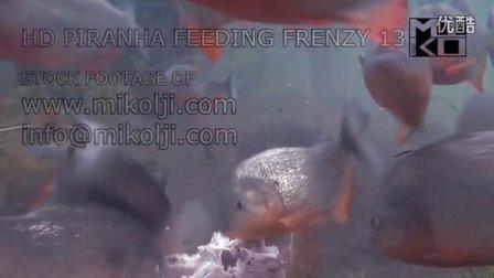 水虎鱼群进食