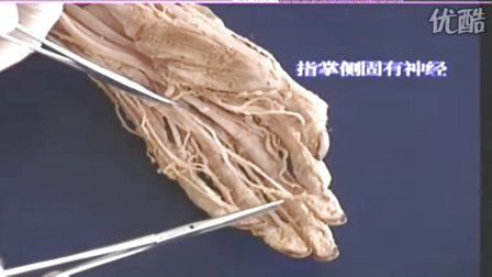 神经系统解剖3