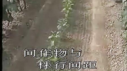 大棚葡萄种植技术_标清