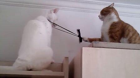 猫猫大作战!猫猫VS黄胖子——带领结就是吃亏啊