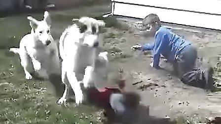 狗狗很凶悍,小北鼻很无辜!