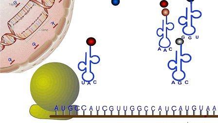 (汉水丑生一轮复习)基因的表达、中心法则