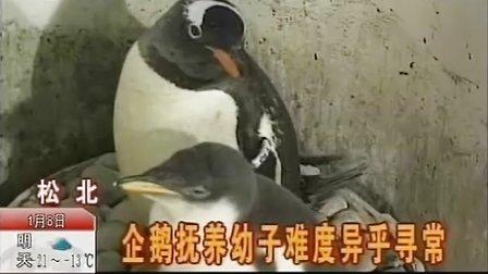 《都市发现》企鹅的生活故事