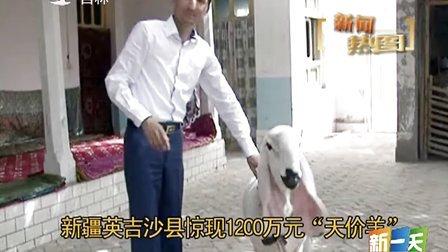 """英吉沙县惊现1200万元""""天价羊""""[新一天]"""