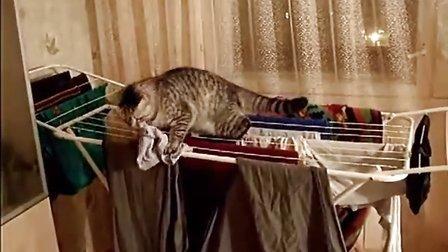【优酷搞笑】我是爱捣蛋的猫咪,我就是爱闯祸!