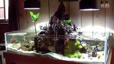 Lei-老外De水陆海水缸