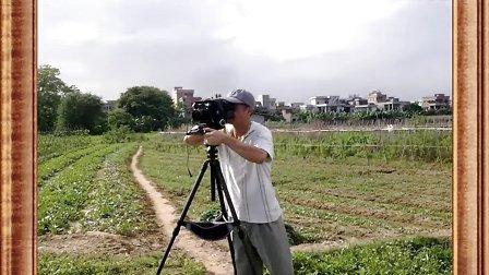 东莞 道滘 上口村种植黑皮冬瓜全过程