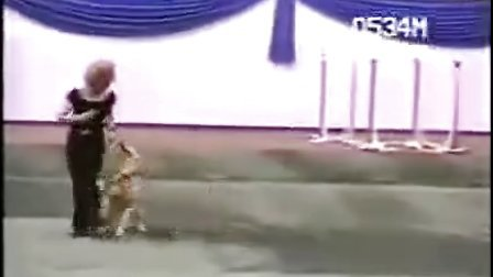 北京金毛犬舍发布金毛训练方法视频,希望大家喜欢(www.jmakc.com)