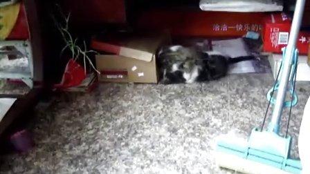 两只嬉闹的小猫咪
