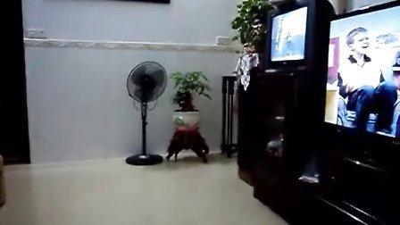 我会跳舞2