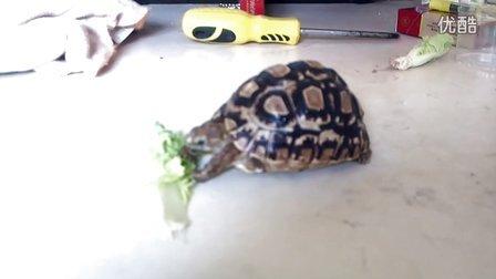 高智商龟蛋吃饭中。。。。