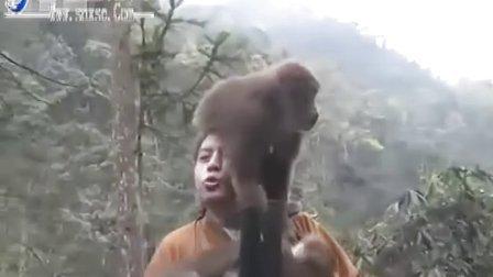 一法师到峨眉山讲法遭猴骚扰