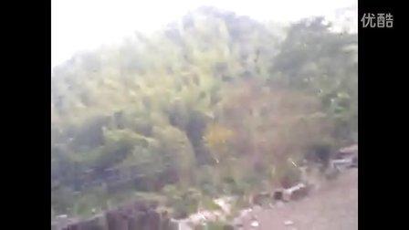 茶树农村种植