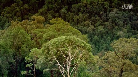 Tropical Rainforest.热带雨林.1992
