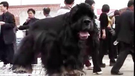 驯狗教程 驯狗视频系列教程3