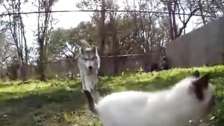 【嘿姆仔宠物搞笑视频】小萌猫和大傻狗傻傻分不清楚 有木有?!