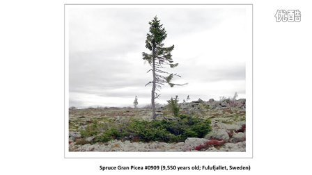 TED,RachelSussman The worlds oldest living things,2010