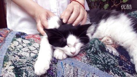 中国传媒大学学生习作——《CatS44号猫主题咖啡馆专题纪录短片》(仿CCTV真诚沟通)