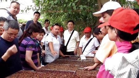 维吾尔大叔介绍葡萄干的鉴定方法