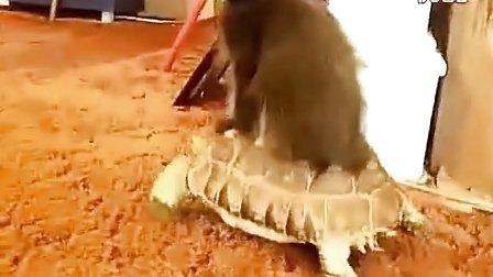 猫星人和它的坐骑 萌翻了!