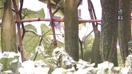 纪录片带红菜农 空中菜园访客多 20120525 首都经济报道