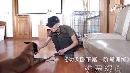 幼犬卧下第一阶段训练 教程样片