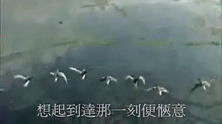 候鳥(原創勵志歌曲)