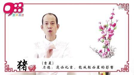 【猪】988苏民峰师傅 马年12生肖运程