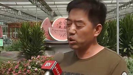 小水果大买卖 京郊采摘新格局 20120521 首都经济报道