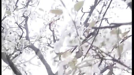 安徽砀山梨花节电视专题片