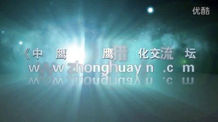 【中华鹰鹘苑】鹰猎视频 训鹰叫远小溜
